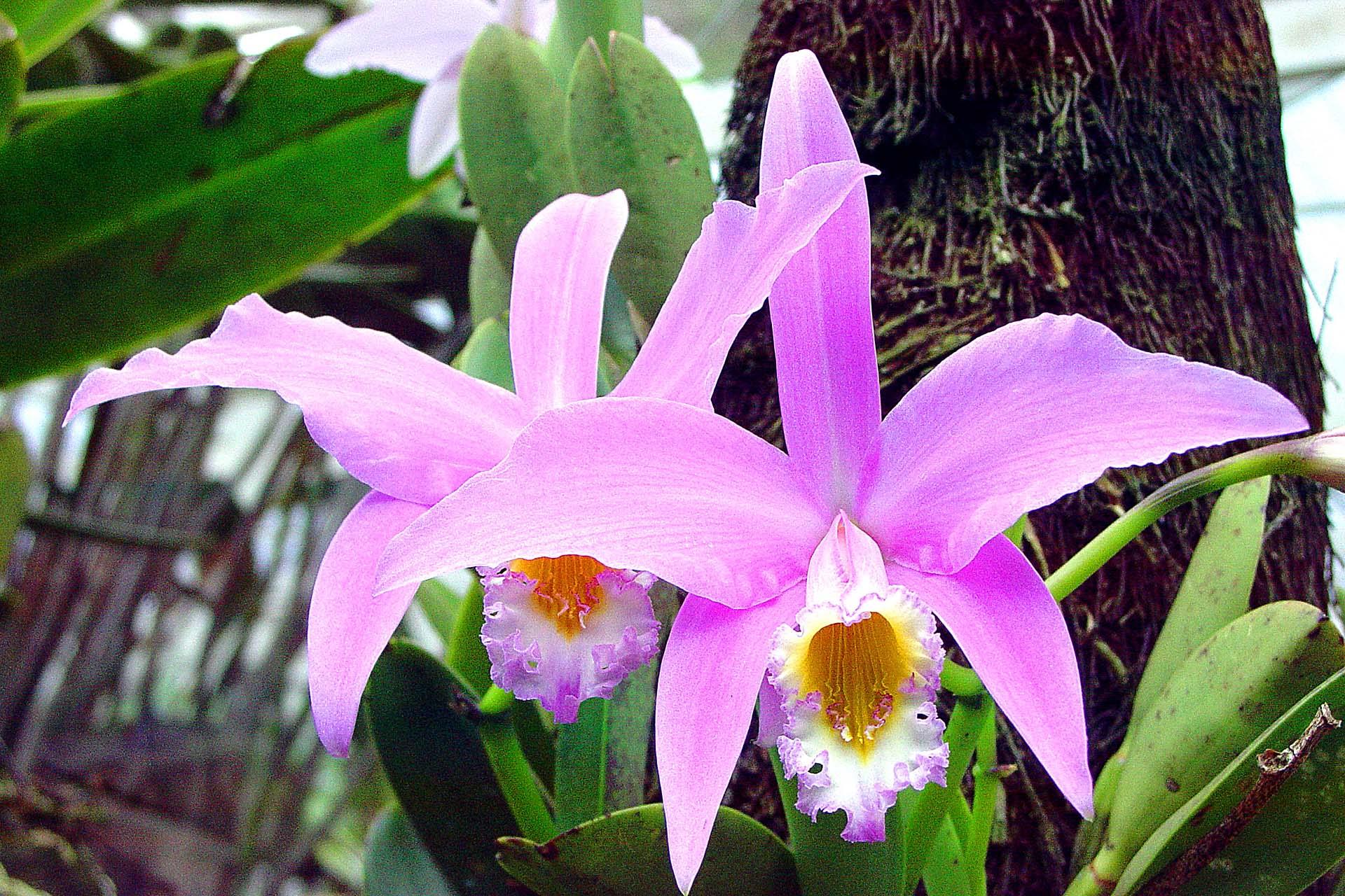 orquideas-3-1391073