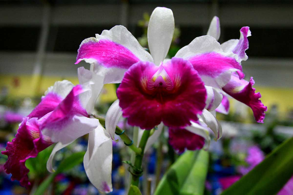 orquidea-1_0df5536c
